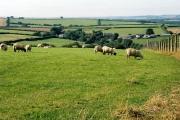 Stoodleigh: Rifton Moor