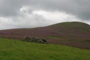 Cleared field, White Meldon.