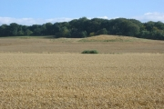 Wheatfield, West Clifton.
