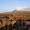 Sheep folds and Ingleborough