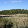 Smith Hill Copse near Cumnor