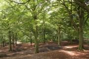 Royds Hall Great Wood