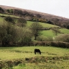 South Tawton: below Cosdon Hill