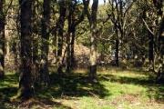 Greengate Wood