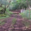 Woodland track beyond Mains of Drimnin
