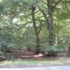 Highmoor Woods