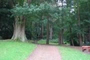 Woodland at Bramhall Hall