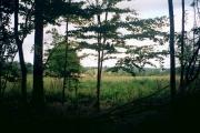 Edge of Wychwood