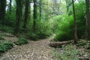 Staddiscombe Woods