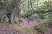 Ercall Wood Nature Reserve