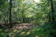 Lashmar Wood, Wivelsfield Green