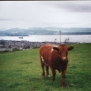 Greenock, the Clyde and a Coo