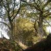 Sunken trackway to Danes Moss
