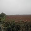 Farmland over Hockerton Moor