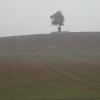 Winter crop showing through
