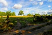 Farmland near Kintbury