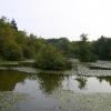 Lake, Abbots Wood