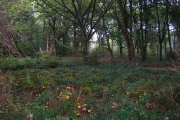 Ogg's Wood, near Polegate