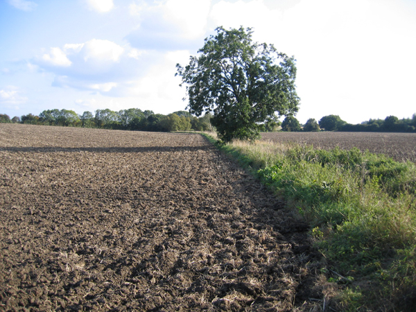 Farmland, Flitton, Beds