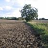 Farmland, Flitton, Beds
