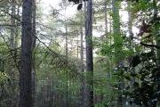 Abbey Wood