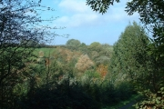 Autumn Woodland