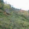 Woodland, Glen Elchaig