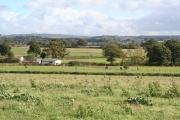 Halberton: paddocks near Ivy House Farm
