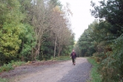 Track in Hamsterley Forest