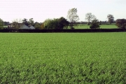Fields on the outskirts of Ulceby