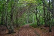 Lumberpit Lane, Great Home Wood