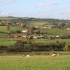 Bradninch: pasture near Poundapit Farm