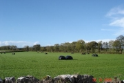 Farmland at Pantasaph