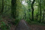 Woodland track, Row Down Wood, Hawkridge, Somerset