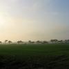 Tree-line, near Butley, Suffolk