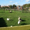 Gorse Hill City Farm, Anstey Road, Leicester