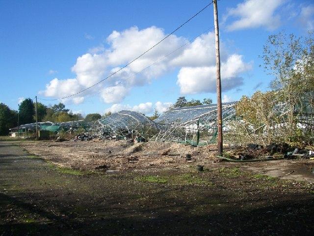 The remains of Halebourne Nurseries