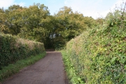 Broadhembury: woods at Kentis Moor