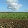 Farmland east of Burton, Dorset
