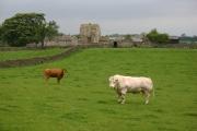 Scargill Castle Farm