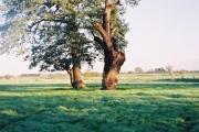 Tree, stump and farmland, Warfield