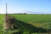 Farmland Near Skipsea