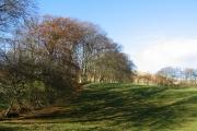 Beech lined fields, Carlops.