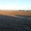Fields north of Ousefleet