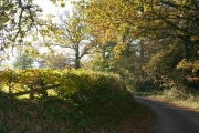 Broadclyst: at the edge of Ashclyst Forest