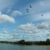 Geese, Startop's End Reservoir, Tring