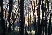 Cleave Wood