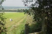 Fields and Woodland near Hangman's Cross
