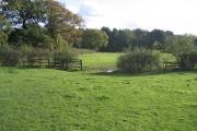 Ambion Wood, Shenton, Leics