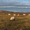 Knowetop Farm, Castlehill, Dumbarton